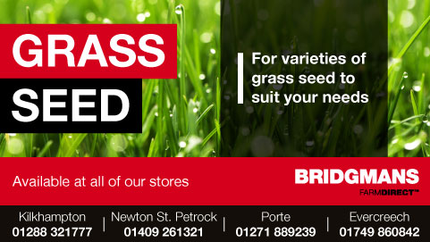 Bridgmans Grass Seed